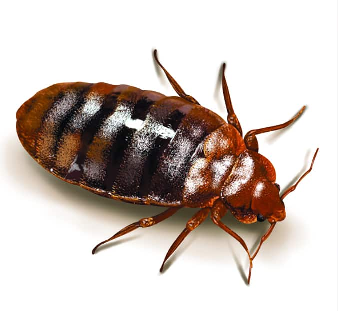 Property Managers: Bed Bug Infestation