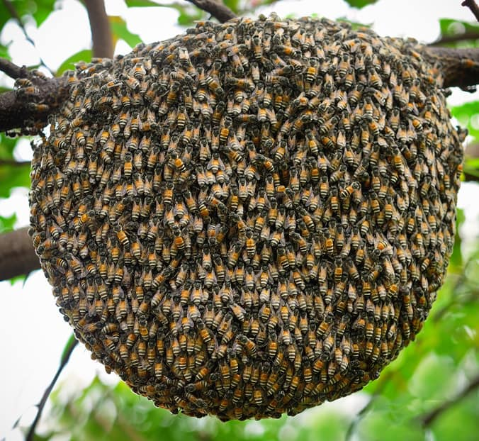 photo of a bee hive