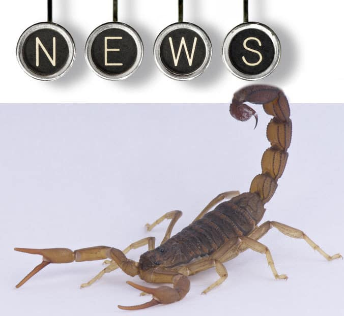 Apartment Managers: Scorpions In The News