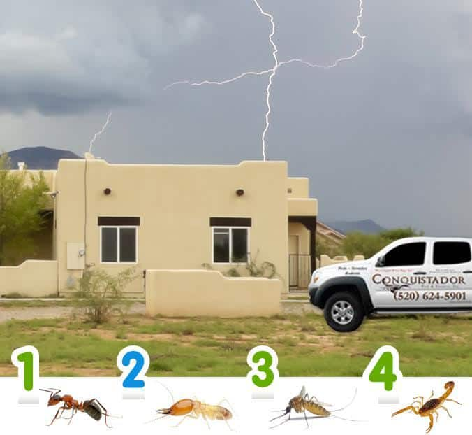 Four Monsoon Pests That May Invade Your Home