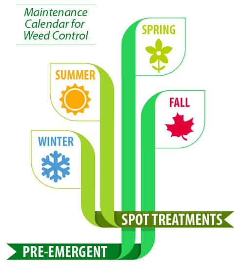 Weed Treatment Schedule graphic