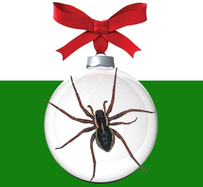 Spiders In Christmas Tree