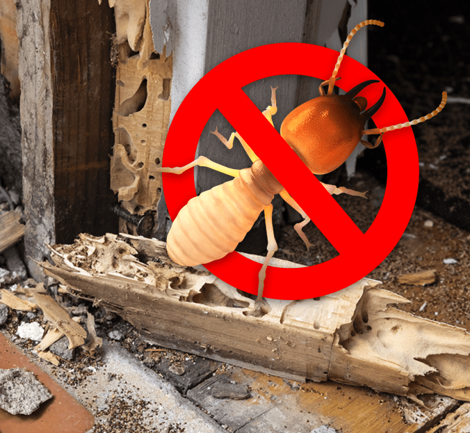 Termite Protection For Property Managers