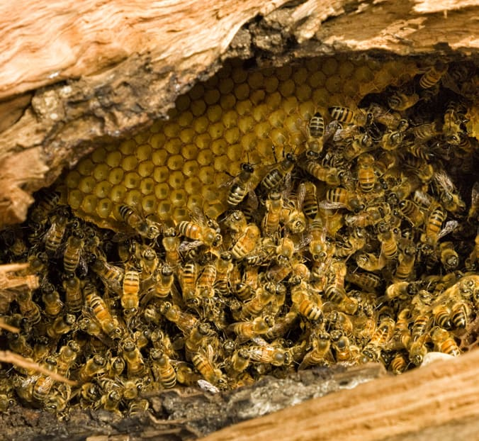Are Bees A Landlord Responsibility