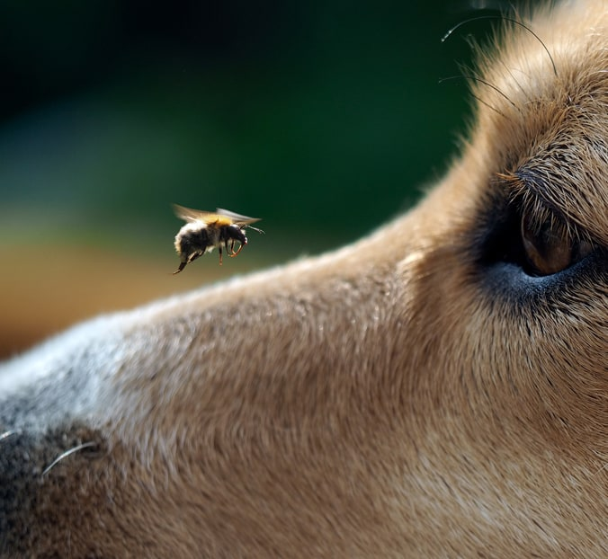 photo of a dog and bee