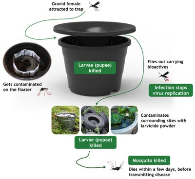 Mosquito Trap Diagram