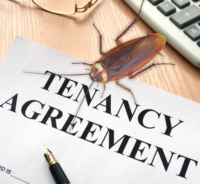 Is Landlord Or Tenant Responsible For Pest Control?