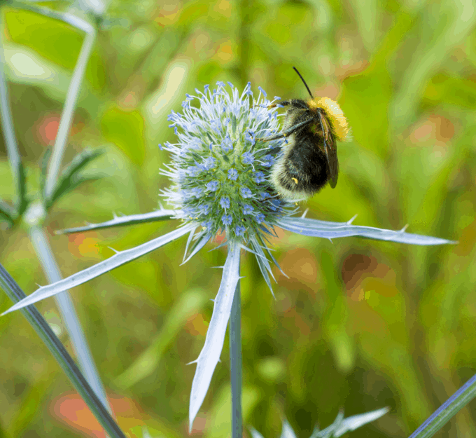 Bugs and Weeds Go Together