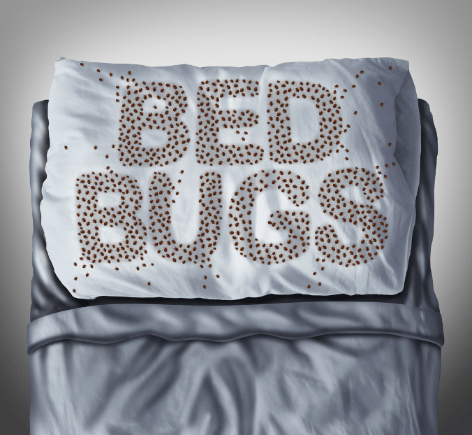 bed bug outbreak